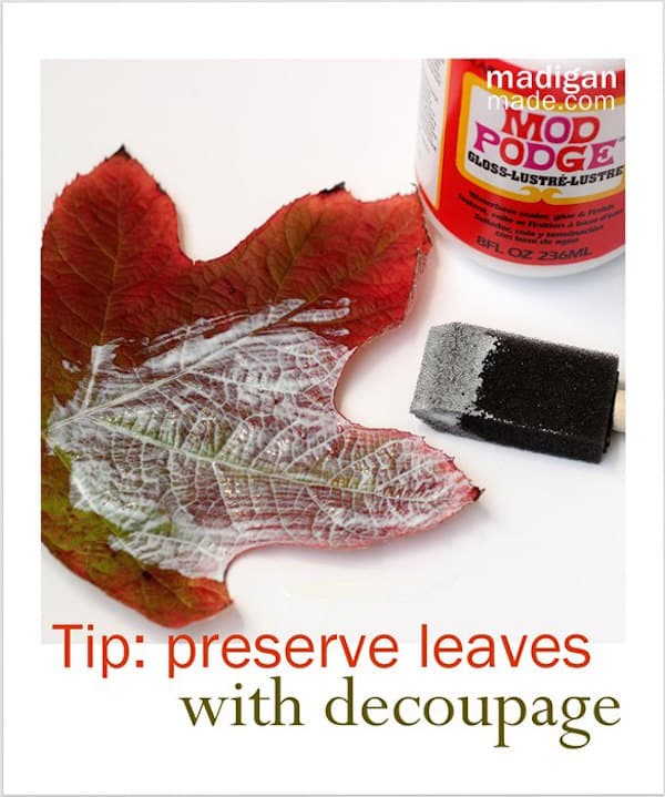 How to Preserve Leaves with Mod Podge