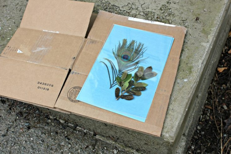 Sunprint Paper Kit Tutorial and Cyanotype Instructions
