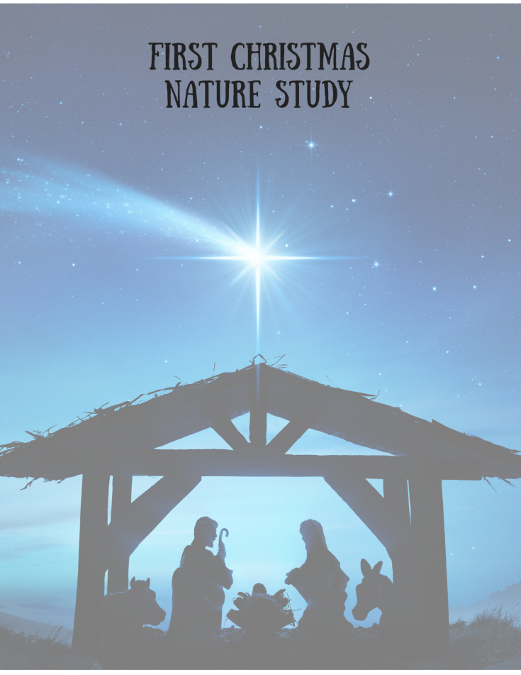 First Christmas Nature Study